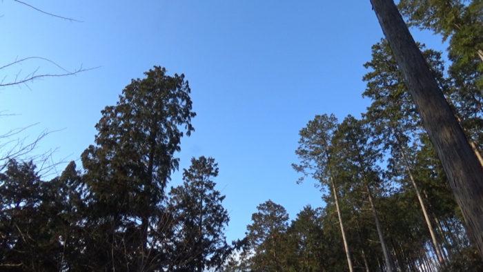 2019-12-14 木もれ陽の森 不安定な天気
