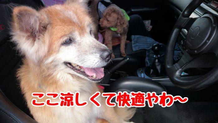 2014-09-14鉢ヶ崎オートキャンプ場 運転席で涼むラン