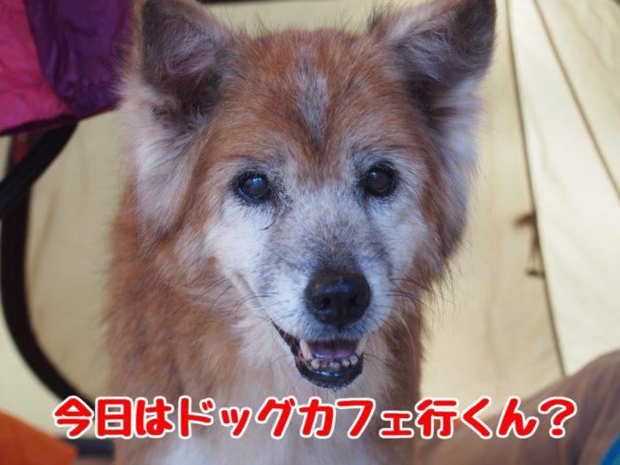 2014-09-14鉢ヶ崎オートキャンプ場 ドッグカフェに行きたいラン