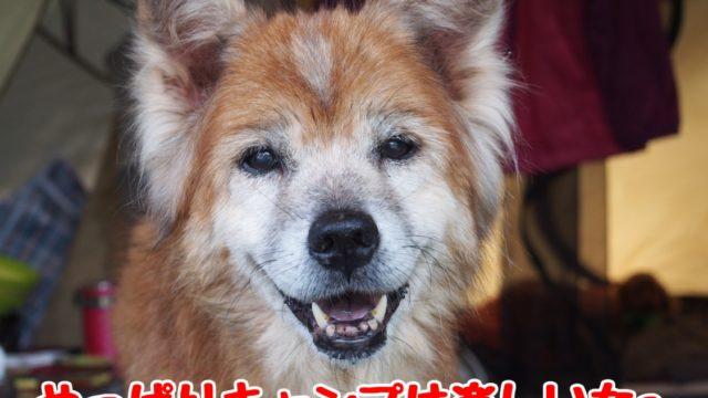 2014-09-14鉢ヶ崎オートキャンプ場 めっちゃ楽しそうなラン