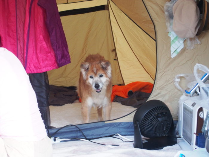 2014-09-14鉢ヶ崎オートキャンプ場 一人でテントに入るラン
