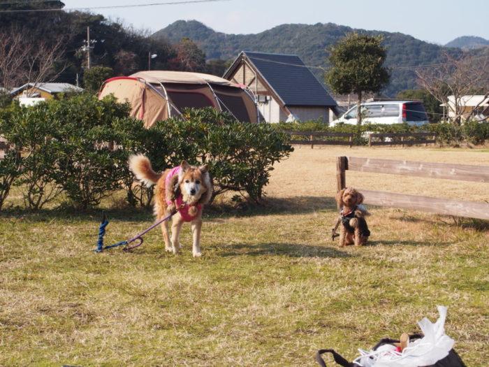 2013-12-31じゃのひれオートキャンプ場 わんこをペグダウン