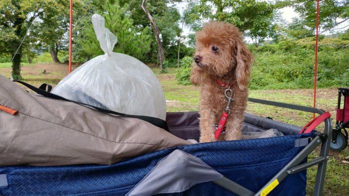 2020-09-27 神鍋高原キャンプ場 マオを載せたカート