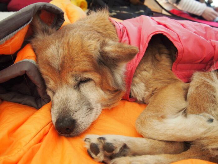 2014正月キャンプじゃのひれ 寝顔が可愛いラン