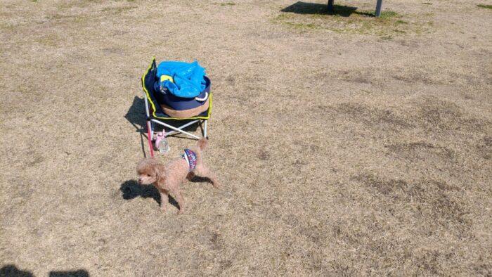 野口オートキャンプ場 設営中のマオ